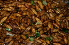 Fried Silk Worms - Street Food - Bangkok, Thailand