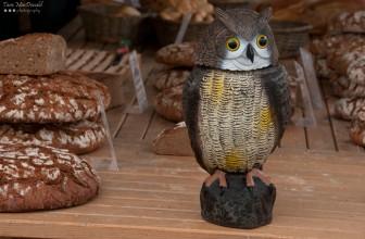 Owl Standing Guard - Benediktiner Markt – Klagenfurt, Austria